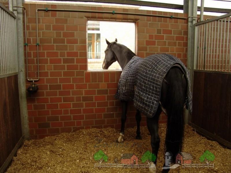 Конь в попоне в деннике