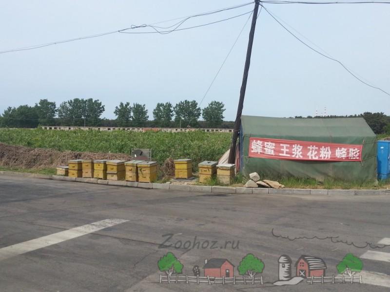 Пасека в городе Вэйхай (Китай) - Фермерский сайт