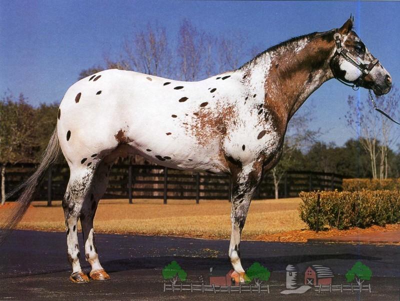 Необычный окрас коня