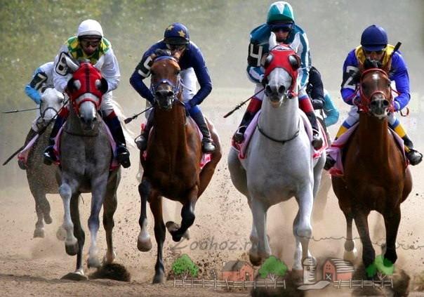Скачки в Арабских Эмиратах