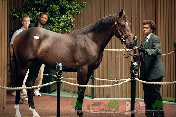 Лошадь на аукционе