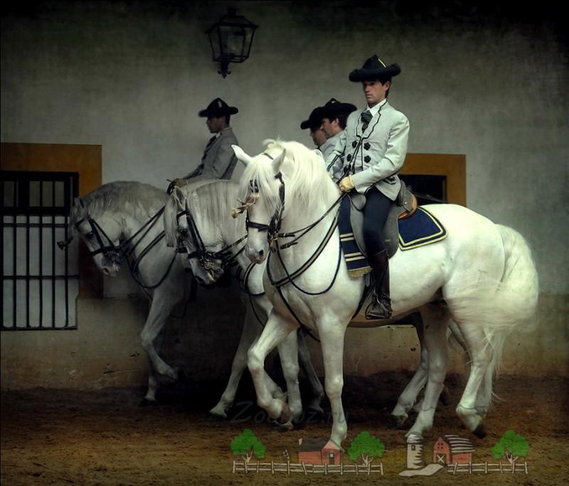 Испанцы на белых конях