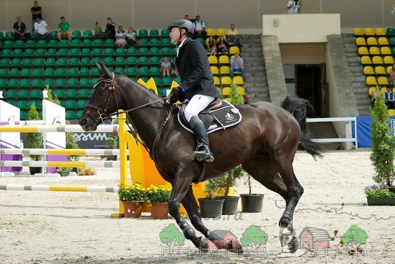 Конкурный конь в ногавках