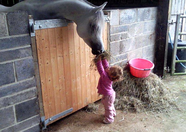 Девочка кормит арабского скакуна