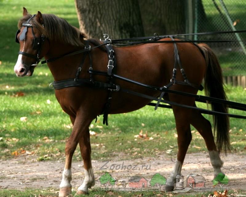 Лошадь в постромочной упряжи