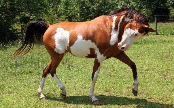 Самые интересные и невероятные факты о лошадях