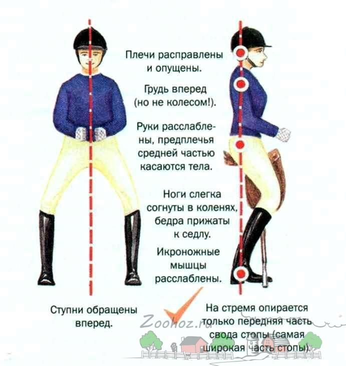 Схема правильного положения всадника в седле
