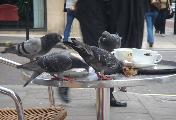 Наглые птички на столе у кафешки
