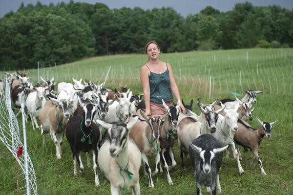 Хозяйка гонит своих коз домой