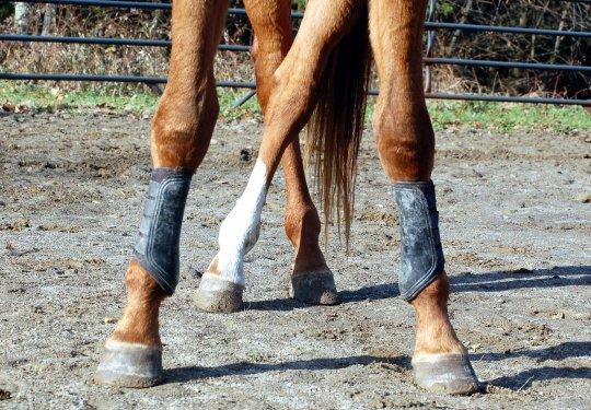 Ноги лошади в защитных ногавках