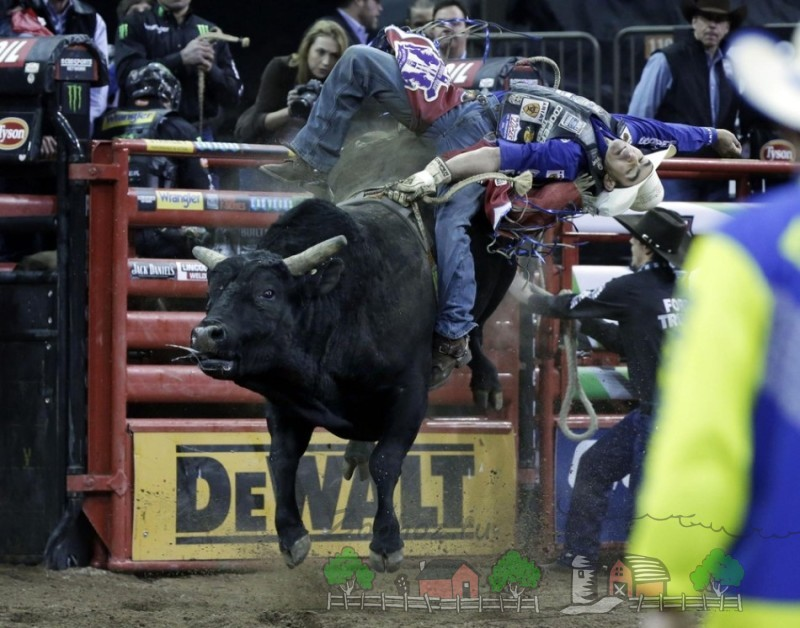 Невероятный кульбит на быке