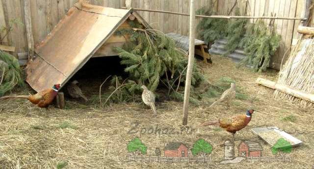 Самодельные укрытия для птиц