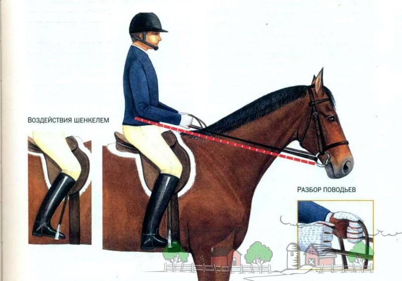 Схема управления лошадью