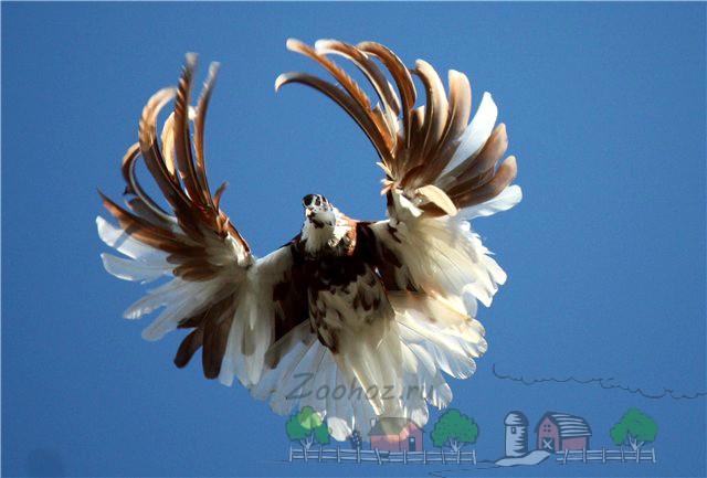 Красивый взмах крыльев