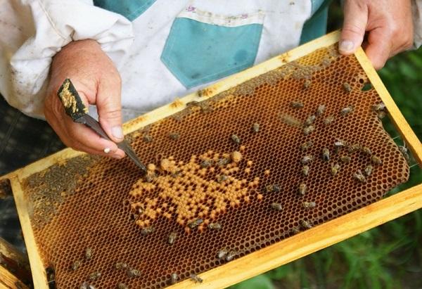 Рамка с сотами и пчелами