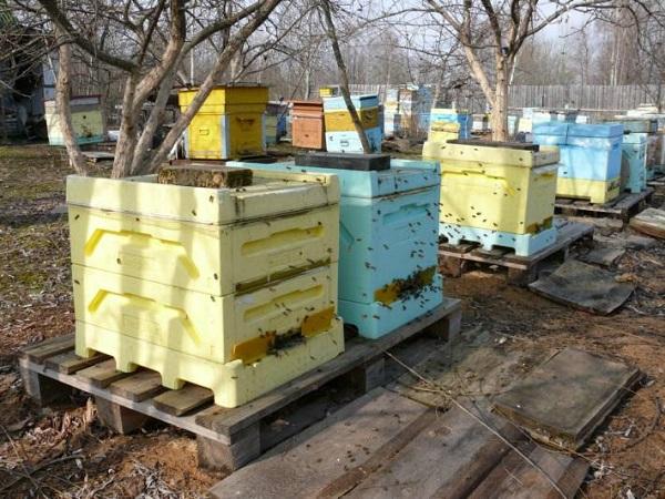 Очистительный облет пчелиных семей