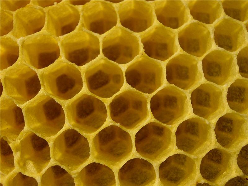 Как пчелы делают мед: описание процесса и видео обзор