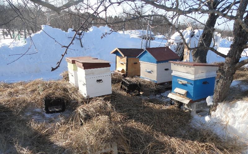 Как и когда правильно производить раннюю весеннюю подкормку пчел: добавки, сахарный сироп (канди) или мед