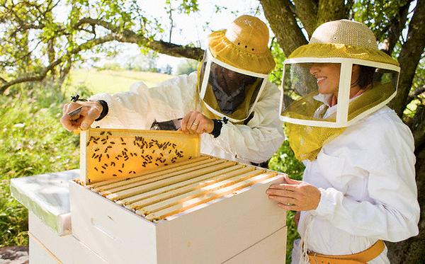 Пчеловоды возле улья