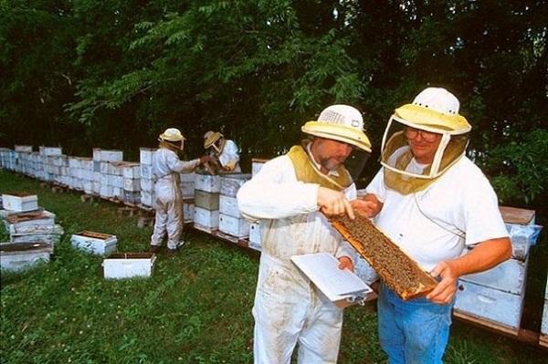 Пчеловоды проводят ревизию пасеки