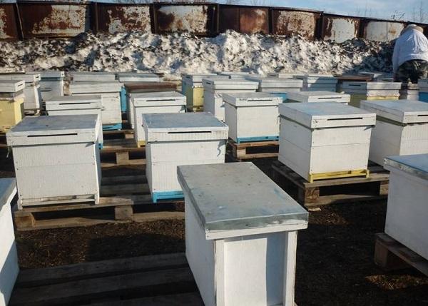 Вынос пчелиных домиков ранней весной