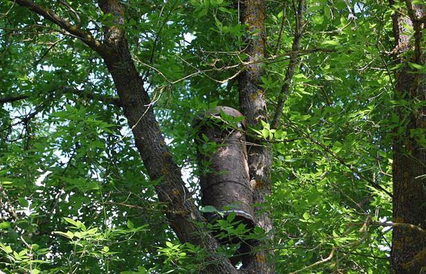 Круглая ловушка на дереве