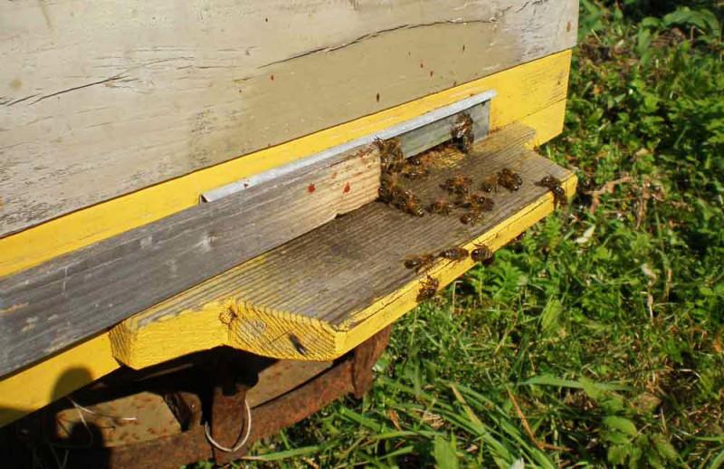 Пчелки работают летом