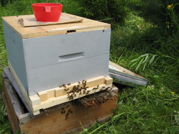 Пчелки обживают новый домик