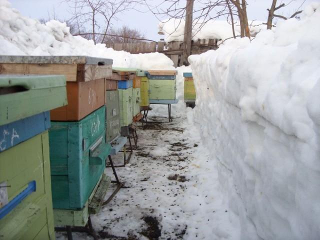 Пчелиные домики по сугробами снега