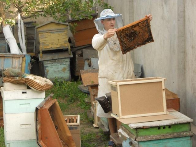 Пчеловод за работой на пасеке