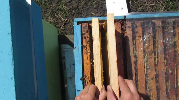 Перенос рамок с насекомыми