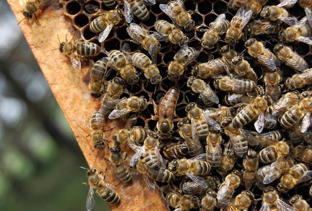 Лечение пчел в весенний период: видео и фото обзор