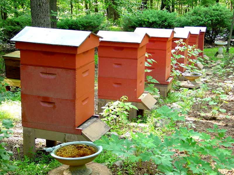 Разведение и содержание пчел в многокорпусных ульях: расширение гнезда и видео про методы пчеловождения