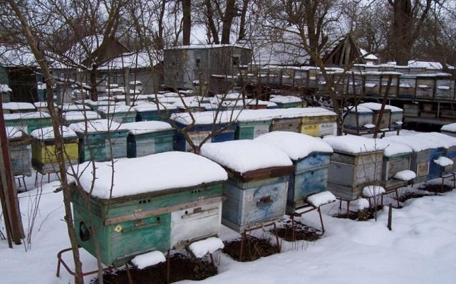 Частные улья в снегу