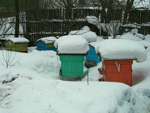 Улья на улице в зимнее время года