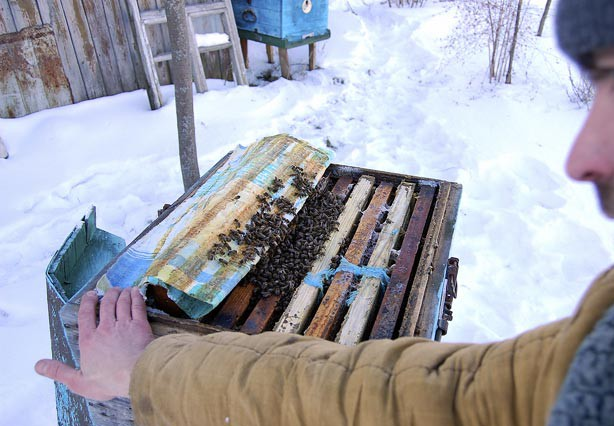 Пчеловод возле пчелиного домика зимой