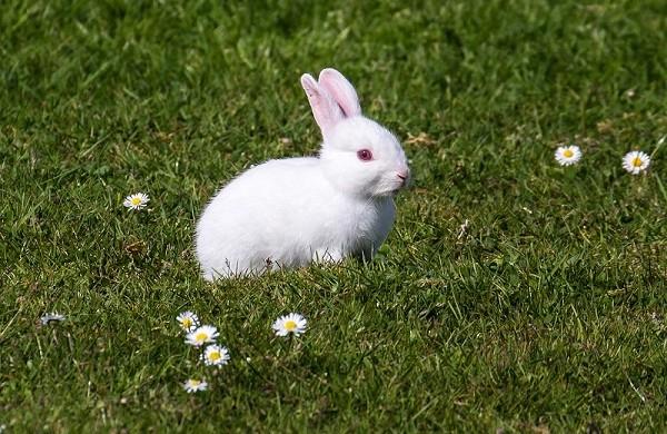Белый кролик на поле