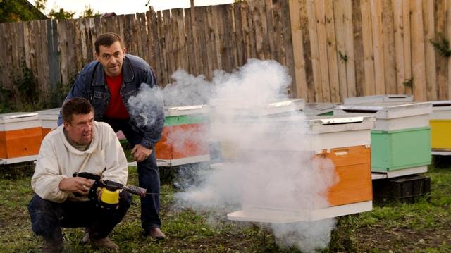 Пчеловоды окуривают ульи