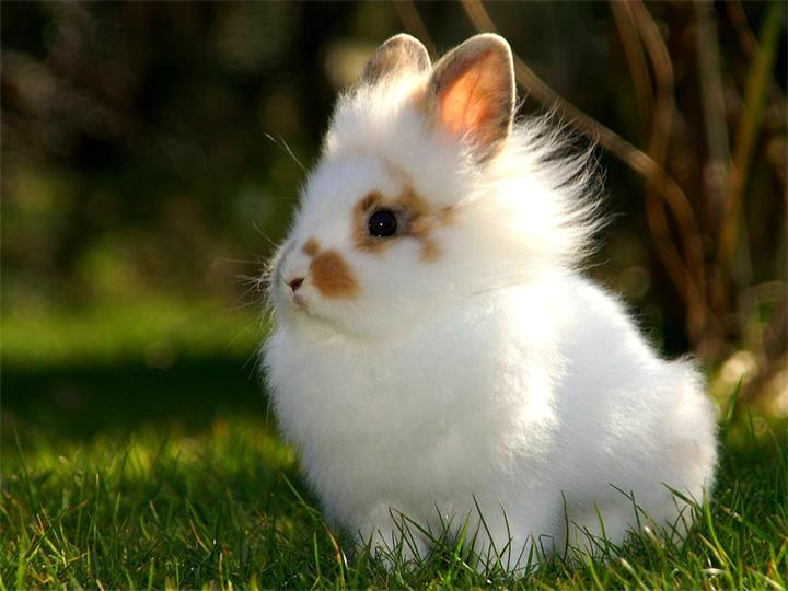 Декоративный крольчонок в траве