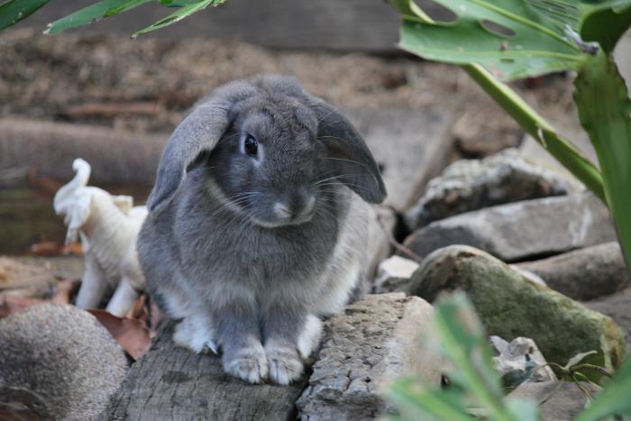 Крольчонок голландской селекции на бревне