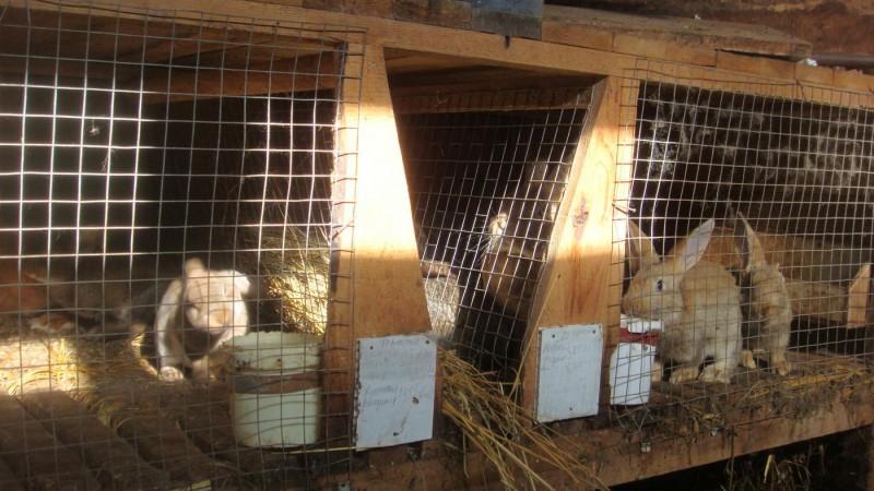 Клетка для кроликов своими руками сетка