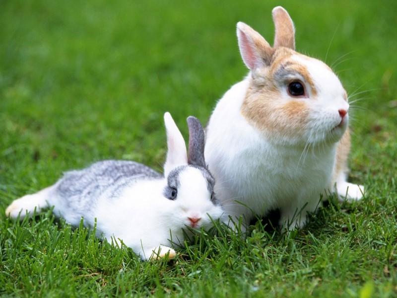 Какую траву можно давать кроликам и почему нельзя свежую или сырую после дождя: советы с фото и видео