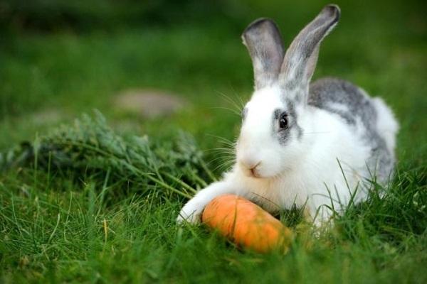 Кролик с морковкой лежит на траве