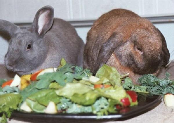 Кролики возле тарелки с овощами