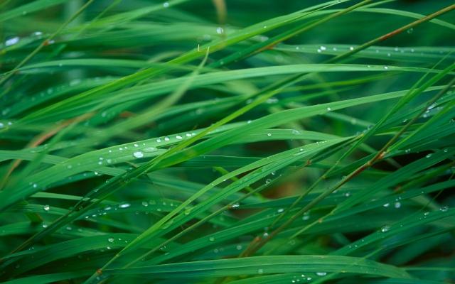 Мокрая трава после дождя