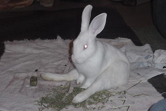 Парез конечностей у кроля