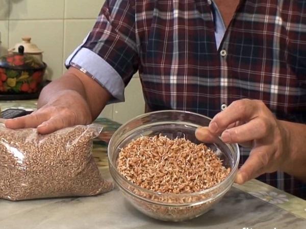 Пророщенная пшеница для кролей