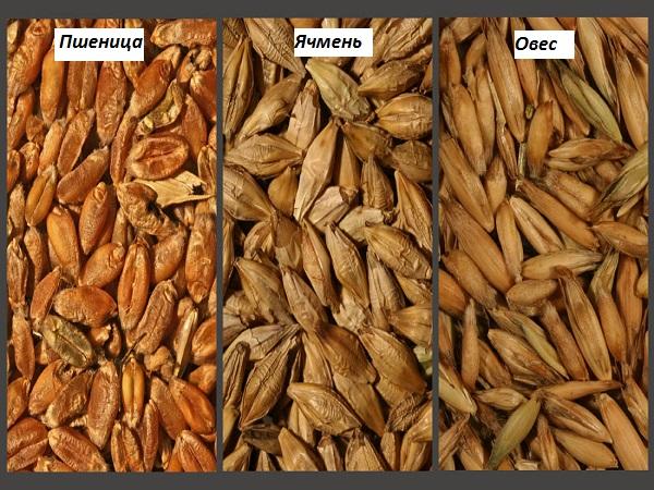 Пшеница, ячмень и овес