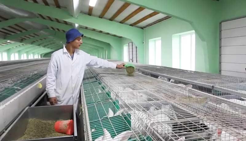 Раздача корма кроликам на ферме