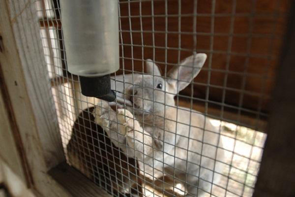 Как сделать поилки для кроликов своими руками из пластиковых бутылок в домашних условиях: чертежи с фото и видео